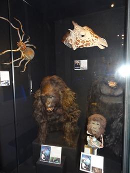 2018.08.22-098 Gorilles dans la brume