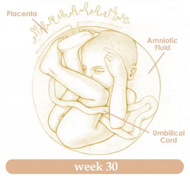Pregnancy diary – 30 weeks