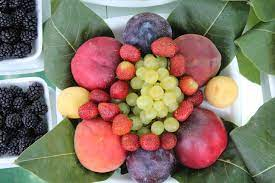 10 fruits which has most protein in them 2021