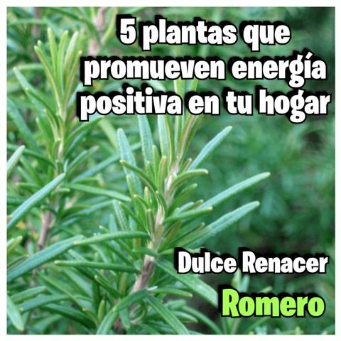 Dulce renacer 5 plantas que promueven energ a positiva for Plantas en el hogar