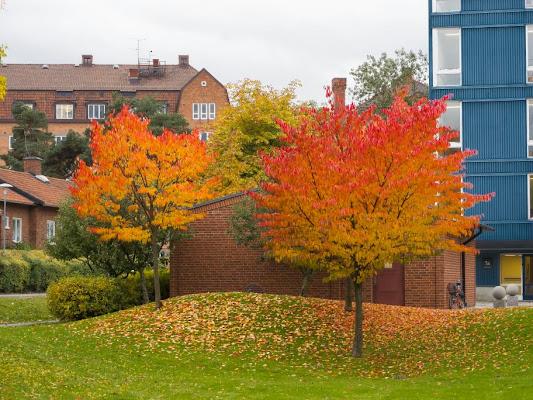 Karolinska Institute, Solnavägen 1, 171 77 Solna, Sweden