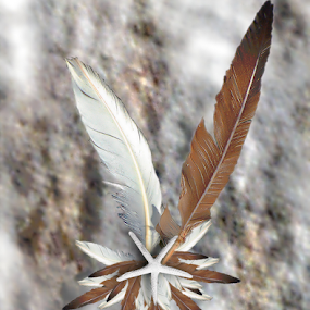 Seagull Feather Starfish Swag by Robin Amaral - Artistic Objects Other Objects ( organic, seagull, decorative, lifestyle, ornament, starfish, home decor, arts and crafts, feathers, natural, crafts )