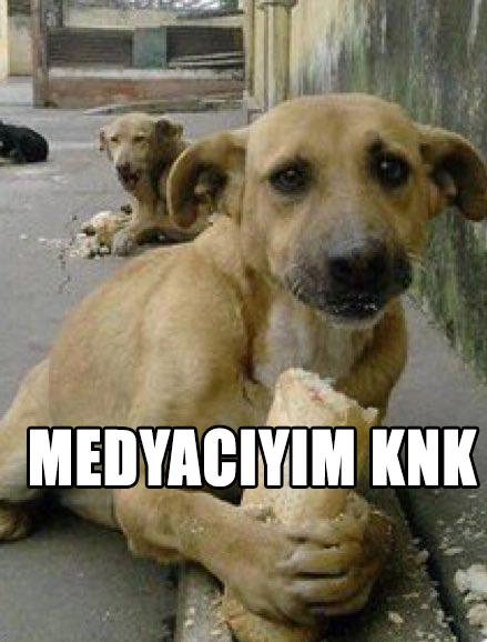 Yalancı Köpeklere İnanmayınız Sakın!!