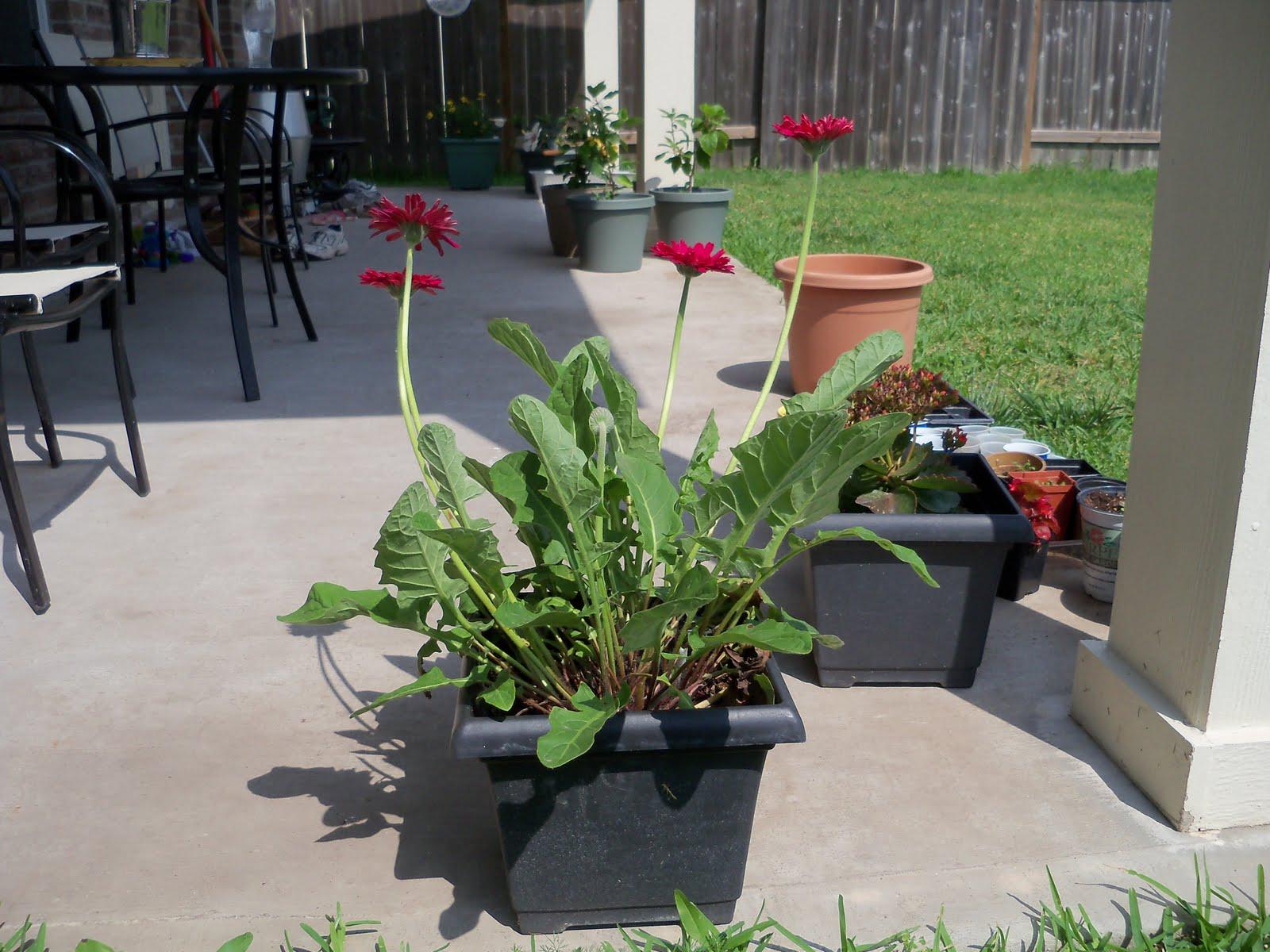 Gardening 2010 - 101_1721.JPG