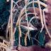 M1019652.jpg
