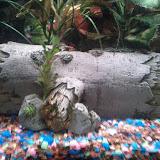 Fish - IMG_20120905_205013.jpg
