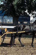 2015-08-22_Baroque_Horse_Show_10321.jpg