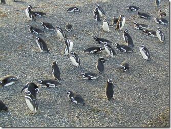 Ushuaia_ilha-dos-pinguins