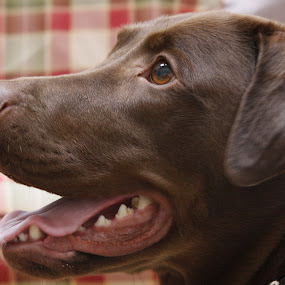 the cutest dog by Logan Williams - Animals - Dogs Portraits ( dogs, portrait, dog, cute, furry )