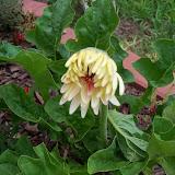 Gardening 2010, Part Two - 101_2934.JPG