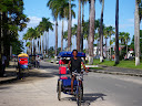 "In Tamatave, the ""pousse-bicyclette"" is the main form of human-powered transport, and this is the pretty Avenue de l'independence."