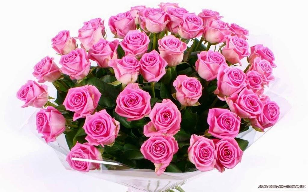 Bộ sưu tập hình ảnh hoa hồng đẹp nhất hiện nay