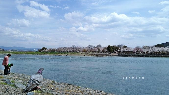9 京都 嵐山渡月橋 賞櫻 櫻花 Saga Par 五色霜淇淋 彩色霜淇淋