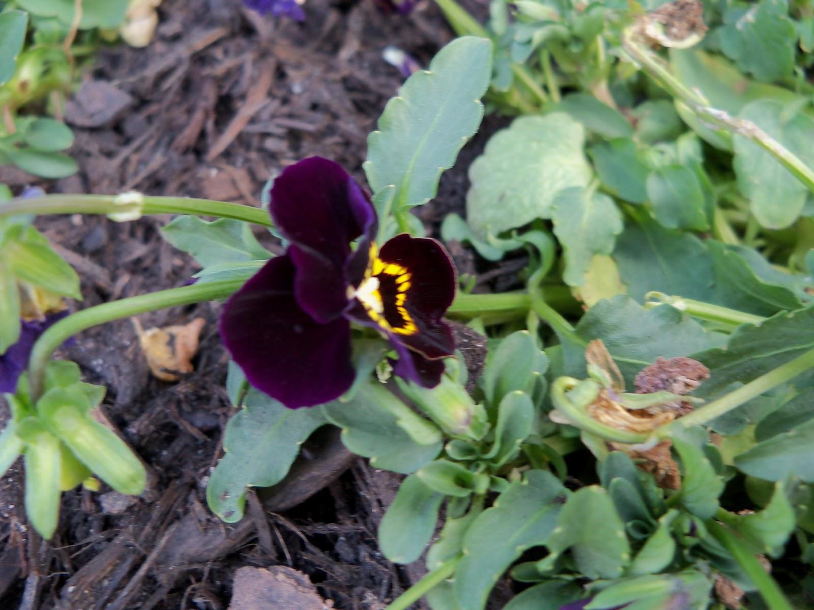 Gardening 2011 - 100_6632.JPG