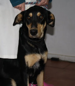 Honey and 3 Puppies - Other Ways We Help - Unavailable For Now