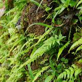 06-23-13 Big Island Waterfalls, Travel to Kauai - IMGP8827.JPG