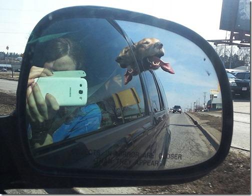 perros asomads a la ventanilla del coche (10)