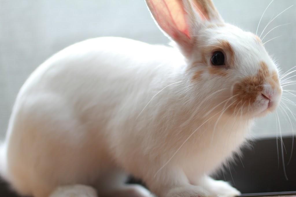 あき ミニウサギ