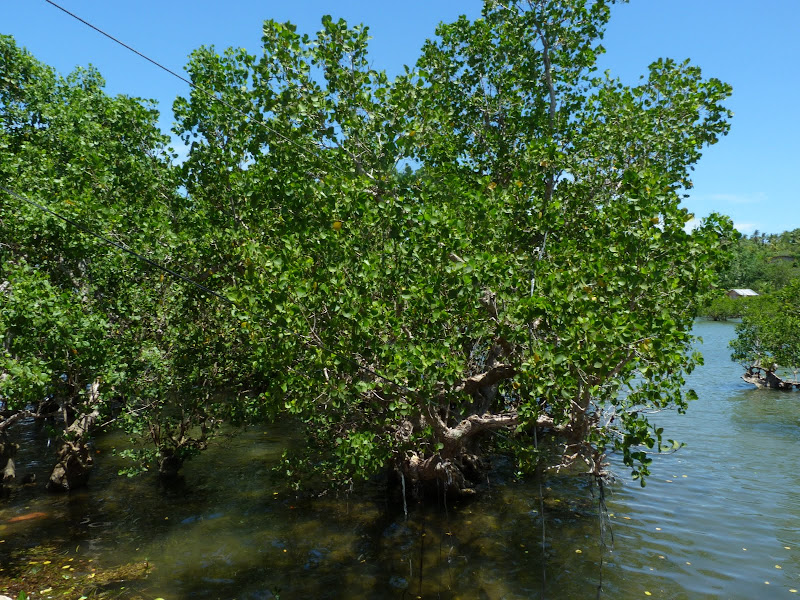 Camotes et Poron island - philippines1%2B929.JPG