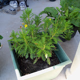 Gardening 2010, Part Three - 101_4495.JPG