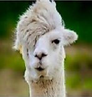 [Llama+2%5B2%5D]