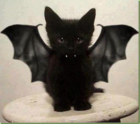halloween kitty hostagesblog