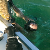 Goliath Grouper Wrangling in Water 3.jpg