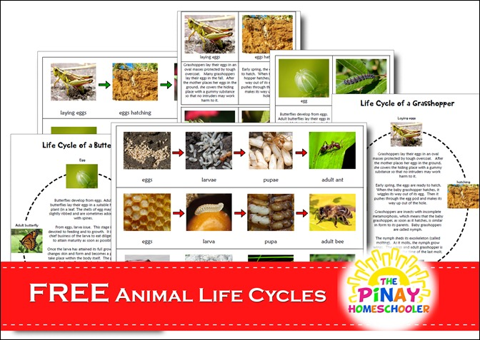 FREE Animal Life Cycles Learning Material