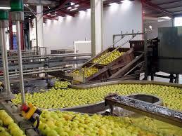 Zone d'activité de Tafraoui: 80 ha consacrés à l'investissement agroalimentaire