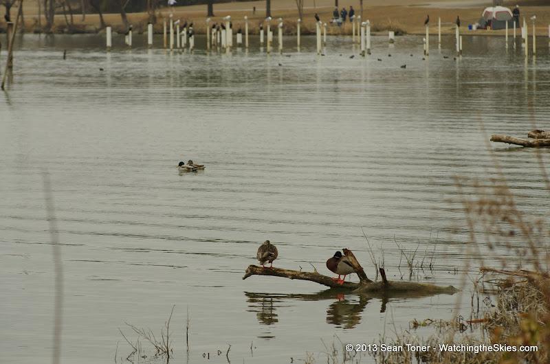 01-26-13 White Rock Lake - IMGP4354.JPG