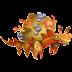 Dragón Hermigrejo   Hermicrab Dragon