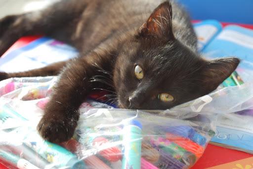 Kitty kleurt ook graag!