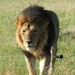 Masai Mara S