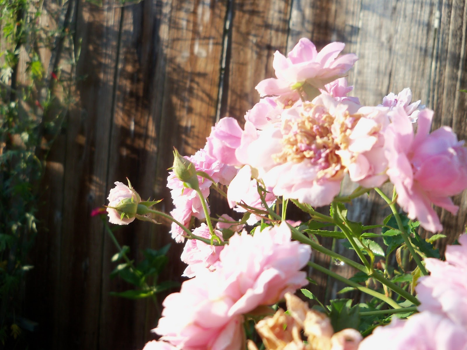 Gardening 2012 - 115_2647.JPG