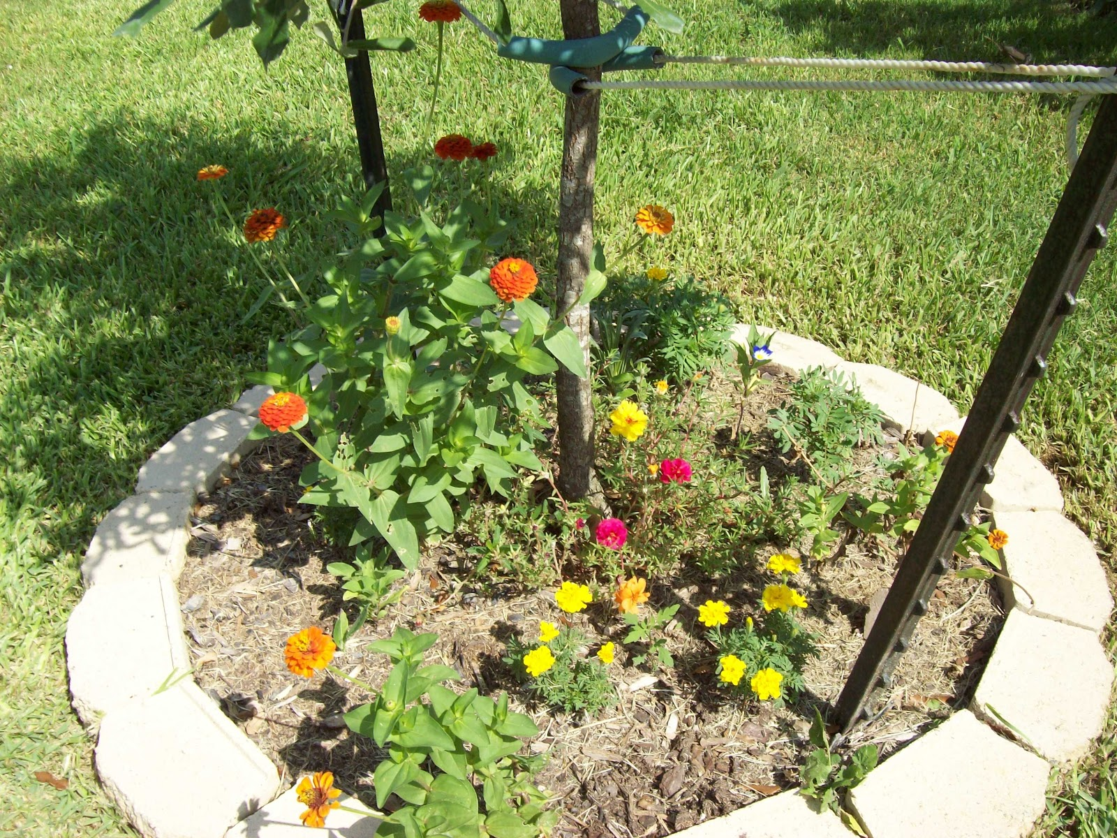 Gardening 2009 - 101_4898.JPG