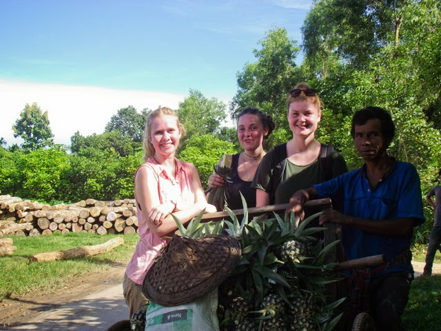 Tasting fresh pineapple of best quality directly coming from the fields