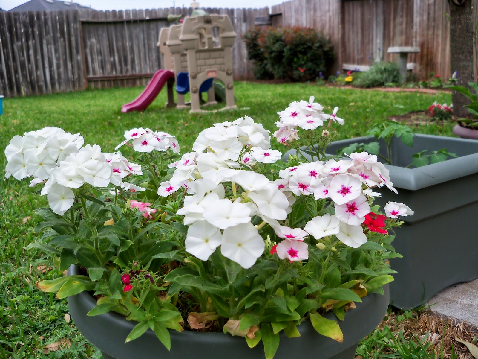Gardening 2014 - 116_1250.JPG
