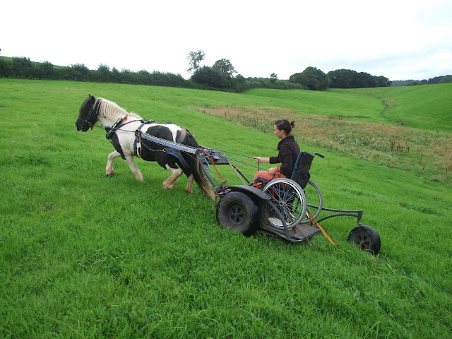 A pony pulling a chariot adapted for a wheelchair