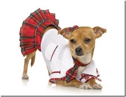 disfraces divertidos para perros  (10)