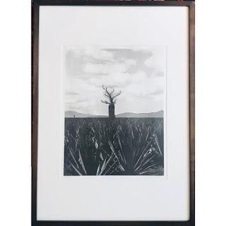 Signed 'Baobab' Photograph