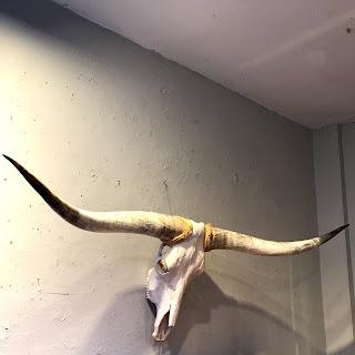 Longhorn Steer Skull