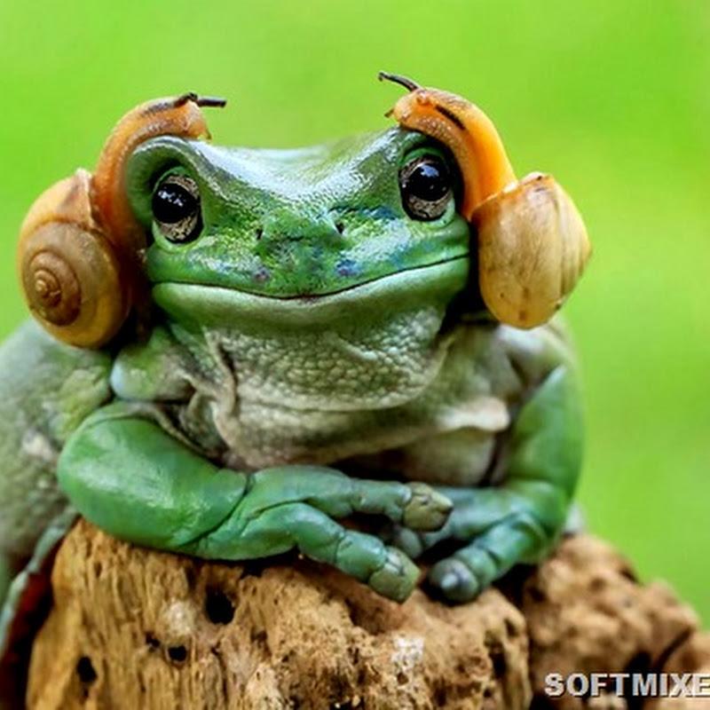 Неожиданный образ обычных лягушек