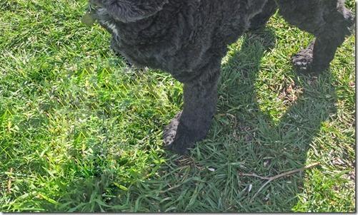 Bubba lost a leg (photoshop)