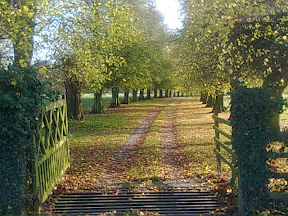 Autumn leaves and trees down a gated track
