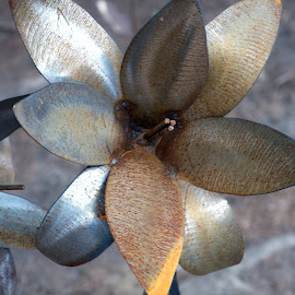 Metal Flower by Donna Davis Kasubeck - Uncategorized All Uncategorized (  )