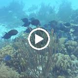 Bonaire 2011 - UWvfJW6-z8zqq3-Qs3McRKUMTX5agwxf1V58kMqXiyve2Tgi4lx0yQCR9_8TCO2WAwM_1cDf8A=m18
