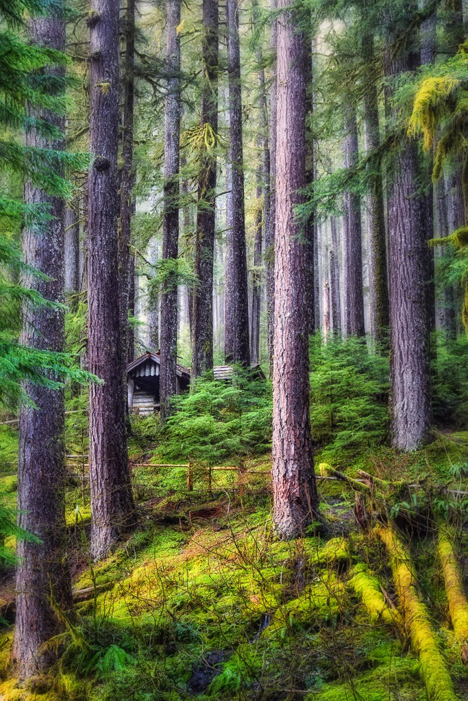 """Sheltered"" by Roy Kropp -- 2nd Place Print General"