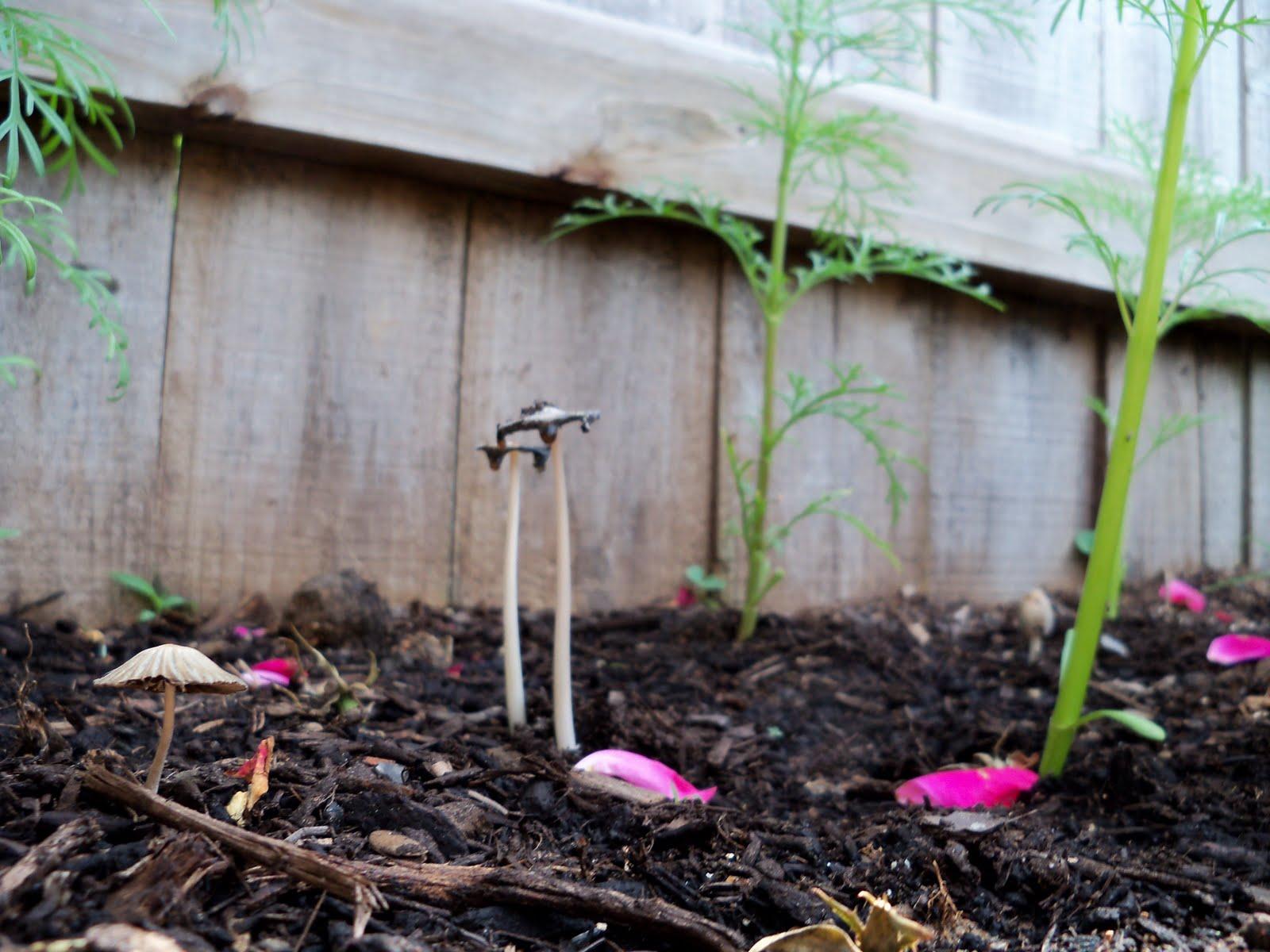 Gardening 2010 - 101_1709.JPG