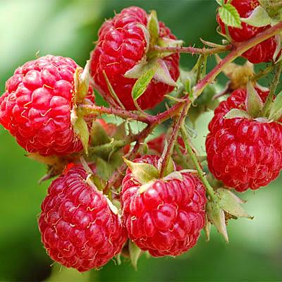 Красная ягода малина
