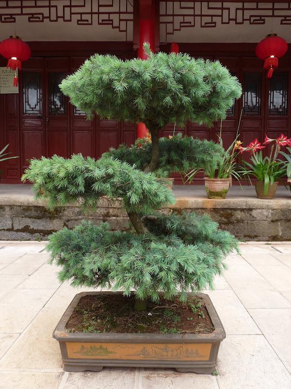 Chine .Yunnan . Lac au sud de Kunming ,Jinghong xishangbanna,+ grand jardin botanique, de Chine +j - Picture1%2B385.jpg